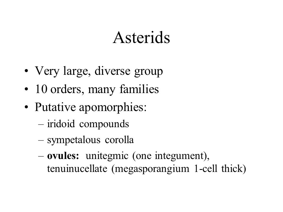 Asterids Very large, diverse group 10 orders, many families