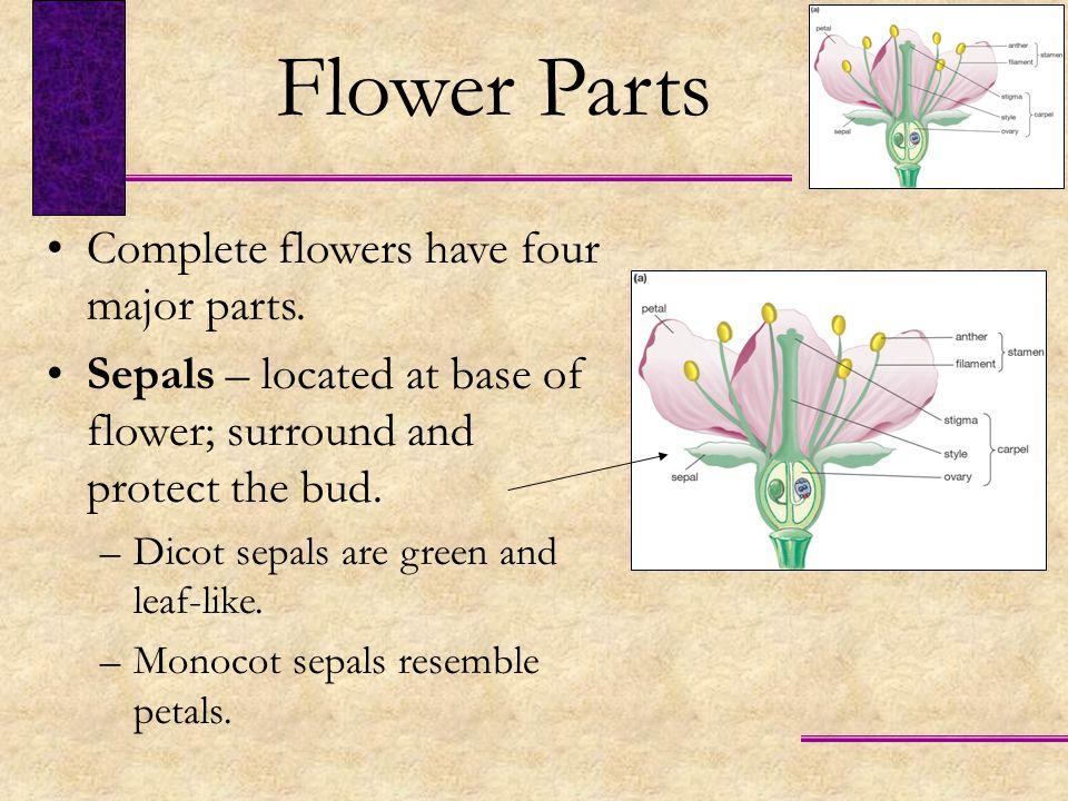 Flower Parts Complete flowers have four major parts.
