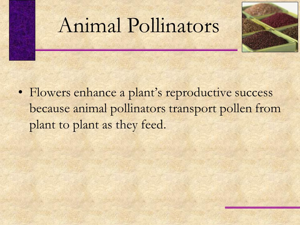 Animal Pollinators Flowers enhance a plant's reproductive success because animal pollinators transport pollen from plant to plant as they feed.
