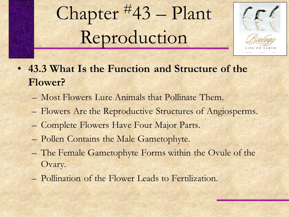 Chapter #43 – Plant Reproduction
