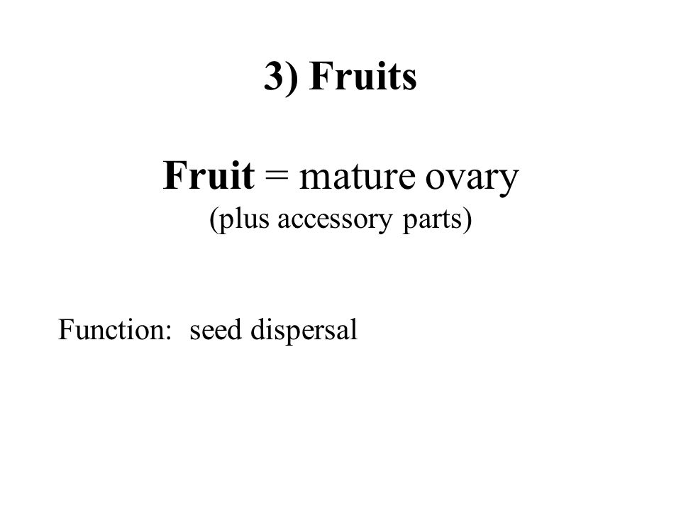3) Fruits Fruit = mature ovary (plus accessory parts)