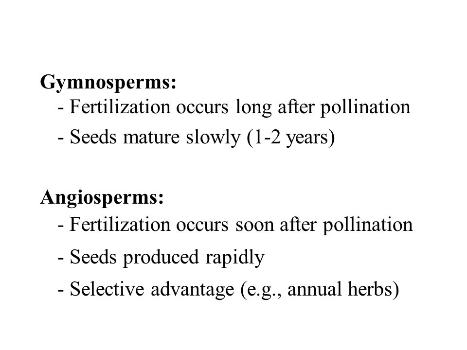 Gymnosperms: - Fertilization occurs long after pollination