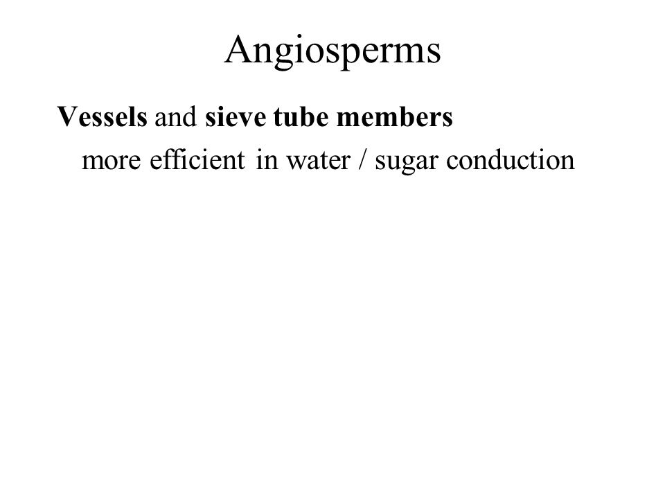 Angiosperms Vessels and sieve tube members