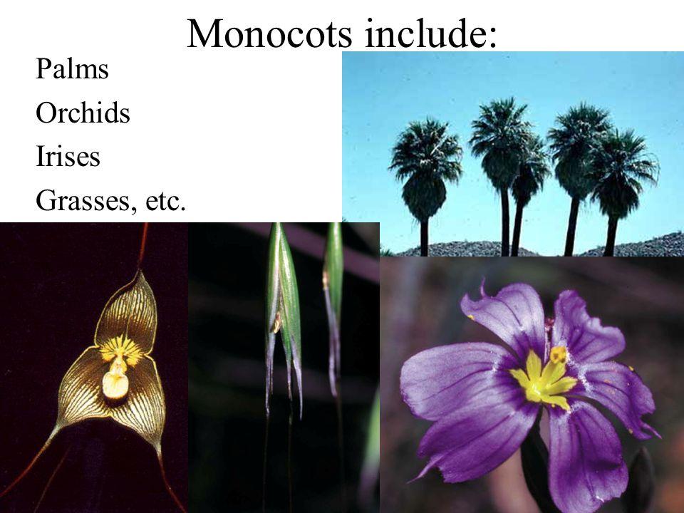 Monocots include: Palms Orchids Irises Grasses, etc.