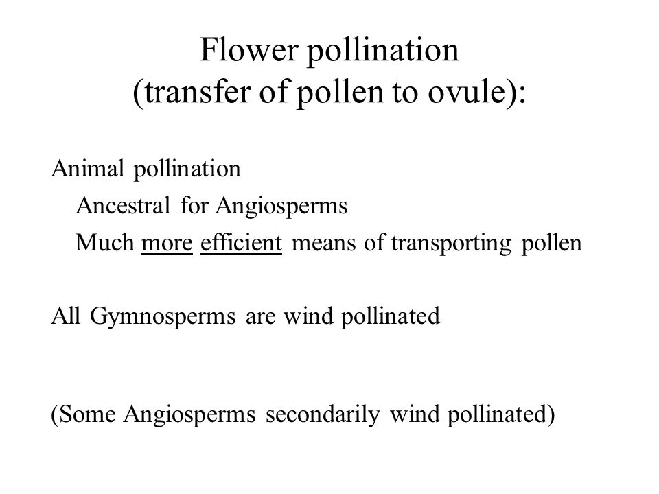 Flower pollination (transfer of pollen to ovule):