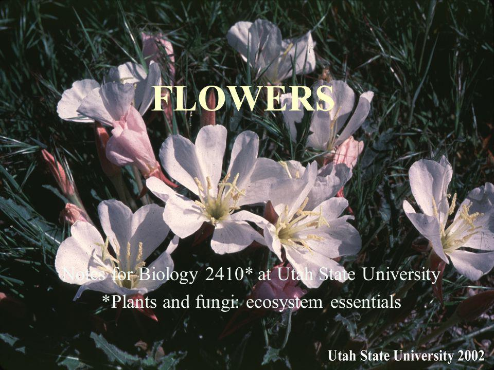 FLOWERS Notes for Biology 2410* at Utah State University