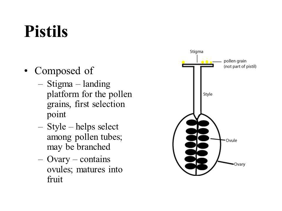 Pistils Composed of. Stigma – landing platform for the pollen grains, first selection point.