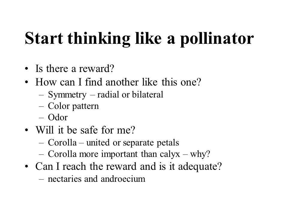 Start thinking like a pollinator