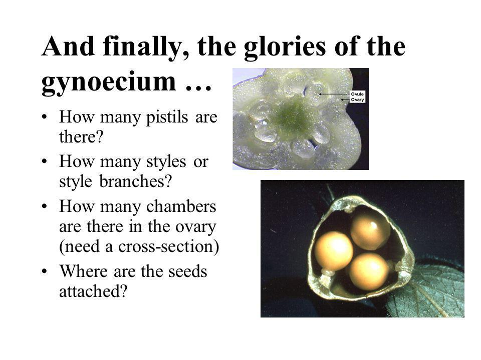 And finally, the glories of the gynoecium …