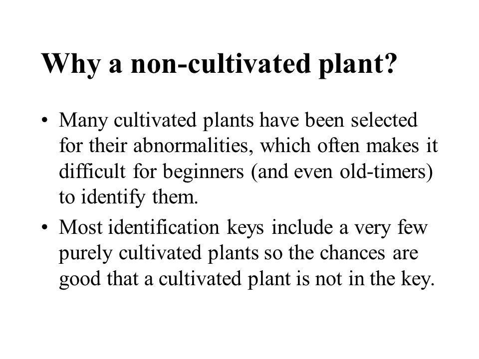 Why a non-cultivated plant
