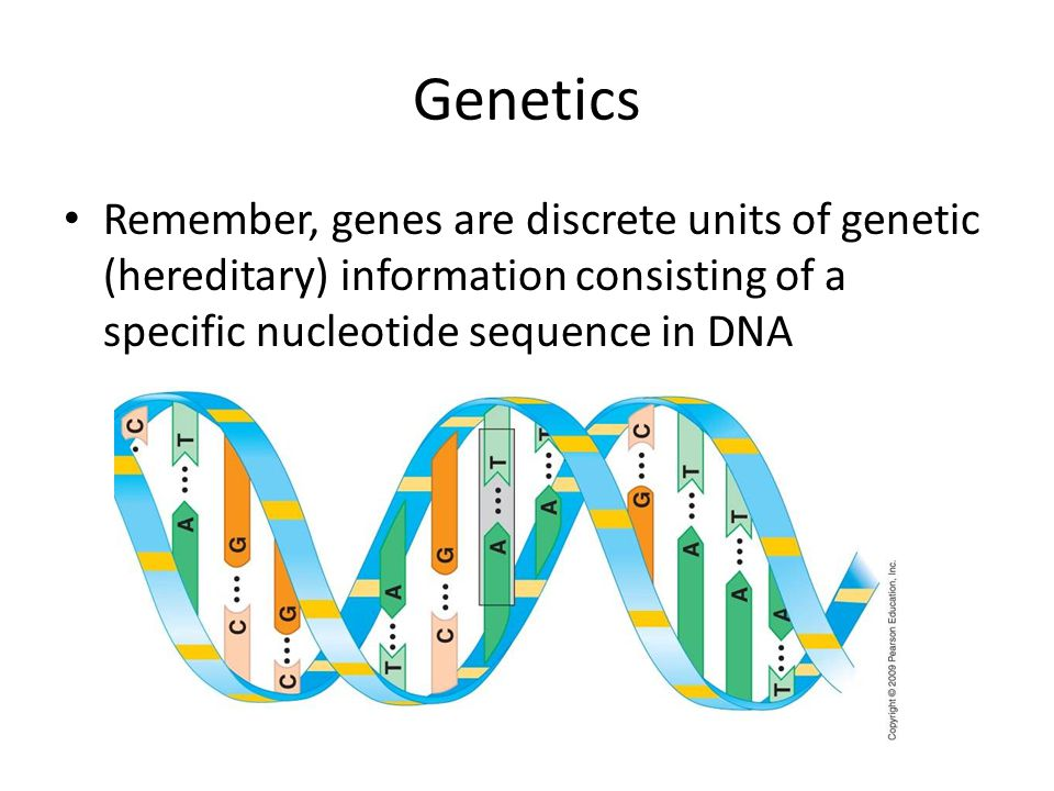 Genetics Remember, genes are discrete units of genetic (hereditary) information consisting of a specific nucleotide sequence in DNA.