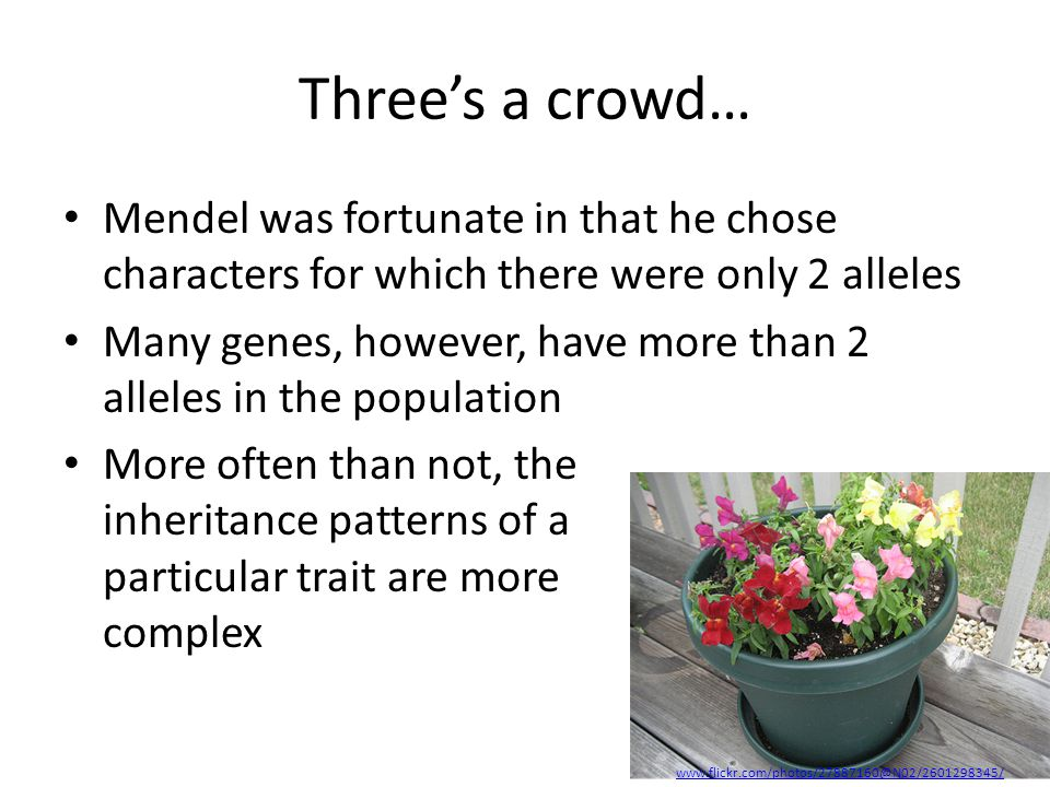 Three's a crowd… Mendel was fortunate in that he chose characters for which there were only 2 alleles.