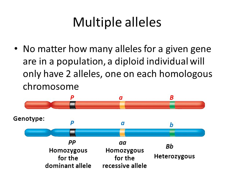 Multiple Alleles Definition Biology 88673 | GNOTES