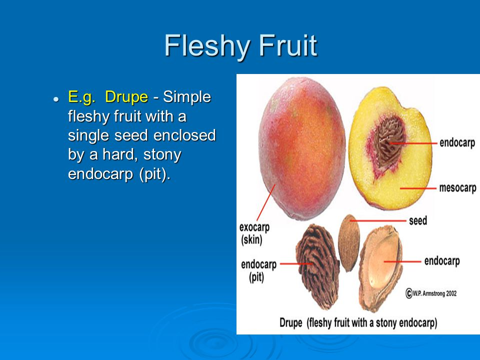 Fleshy Fruit E.g.