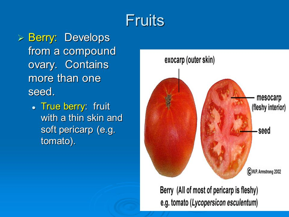 Fruits Berry: Develops from a compound ovary. Contains more than one seed. True berry: fruit with a thin skin and soft pericarp (e.g. tomato).