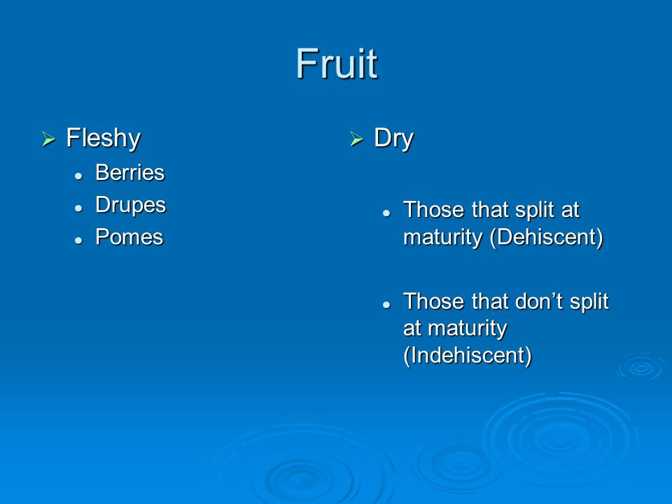 Fruit Fleshy Dry Berries Drupes