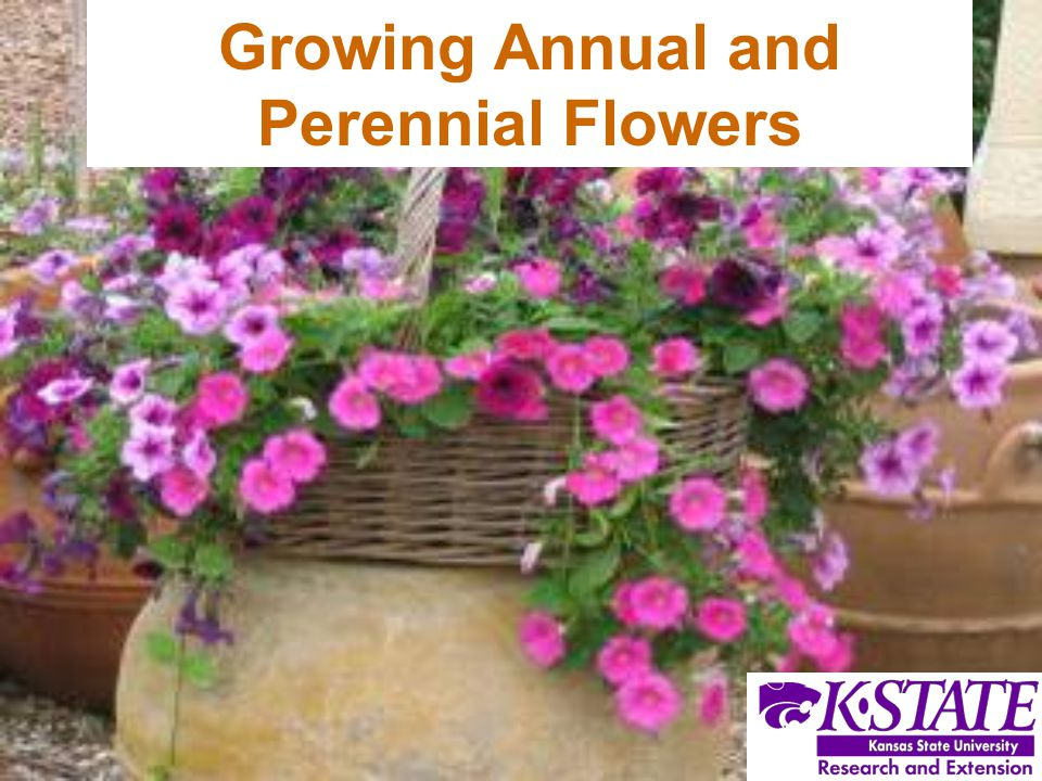 Growing Annual and Perennial Flowers