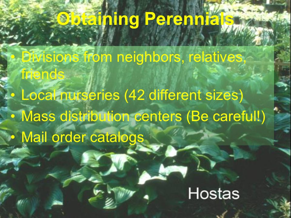 Obtaining Perennials Divisions from neighbors, relatives, friends