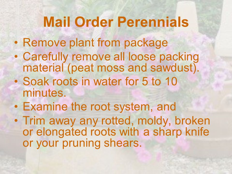 Mail Order Perennials Remove plant from package