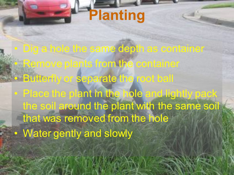 Planting Dig a hole the same depth as container