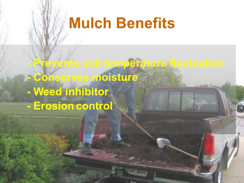 Mulch Benefits - Conserves moisture - Weed inhibitor - Erosion control