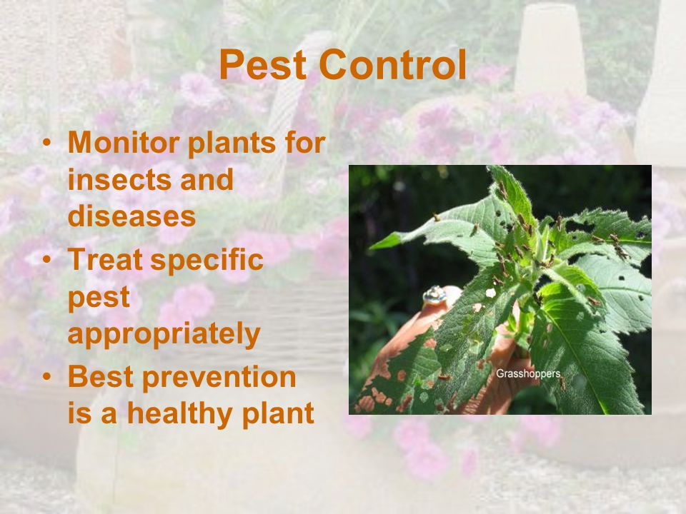 Pest Control Monitor plants for insects and diseases