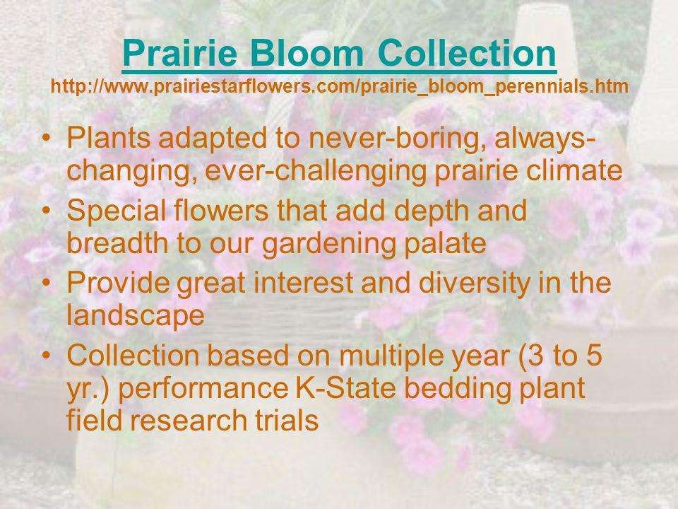 Prairie Bloom Collection http://www. prairiestarflowers