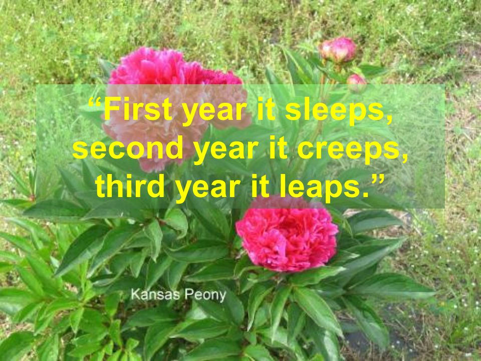 First year it sleeps, second year it creeps, third year it leaps.