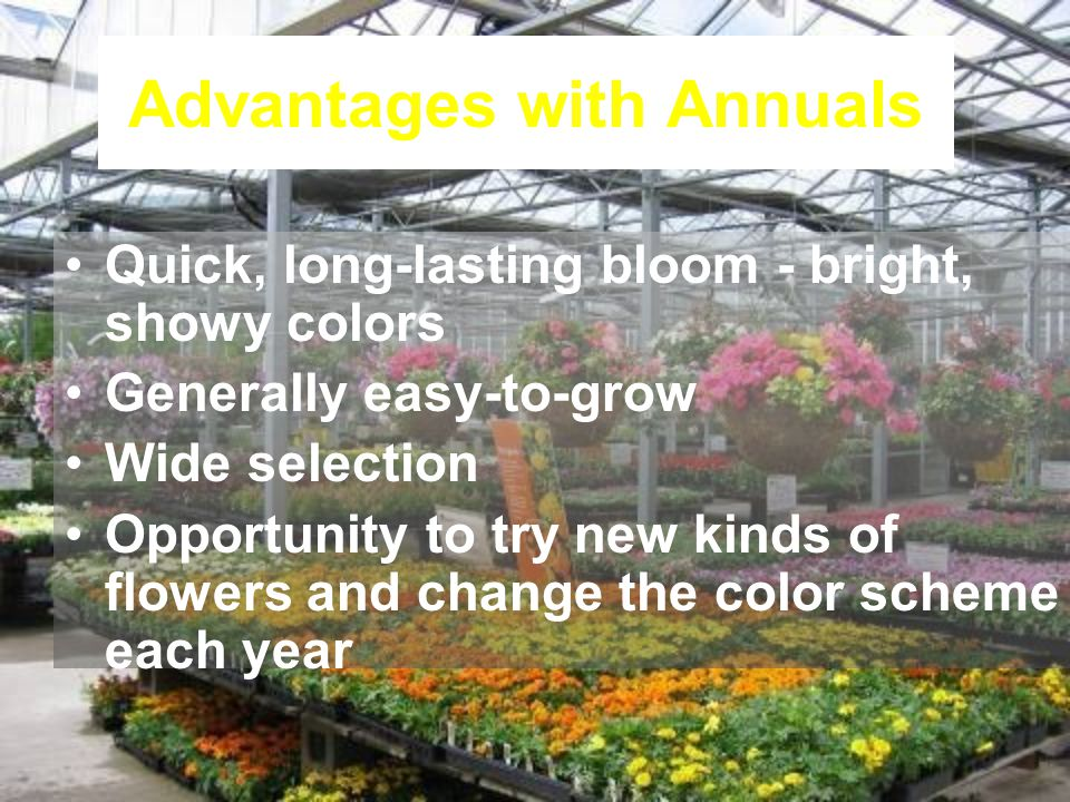 Advantages with Annuals