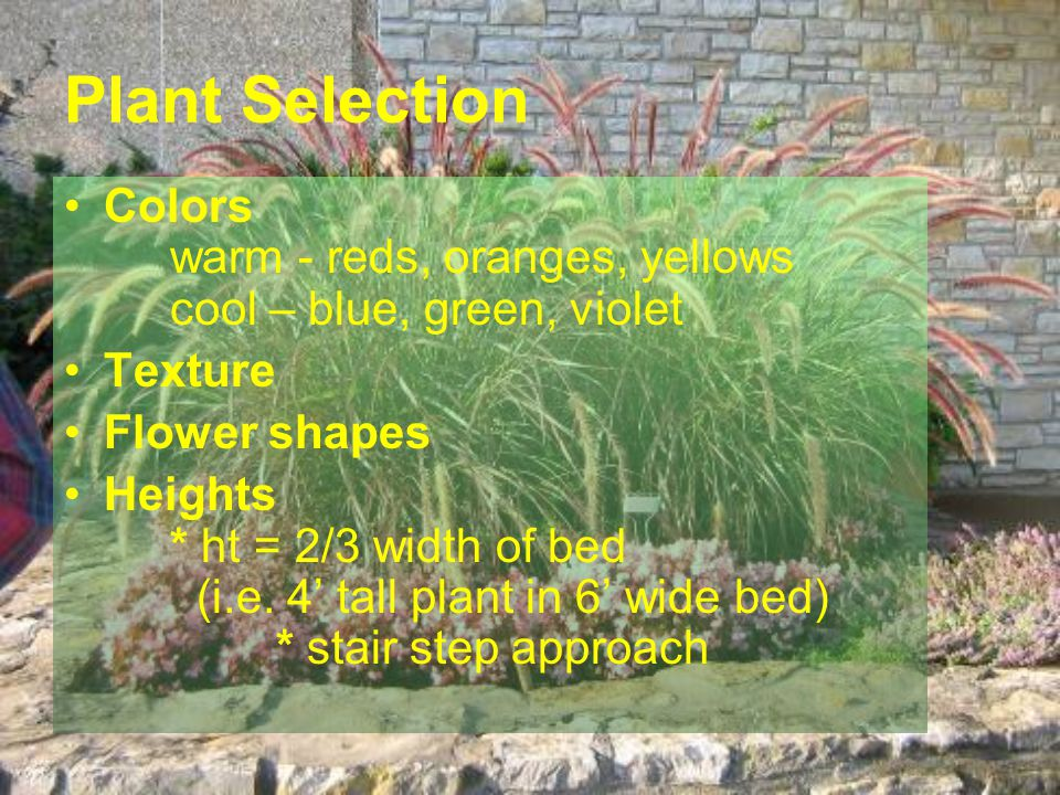 Plant Selection Colors warm - reds, oranges, yellows cool – blue, green, violet. Texture. Flower shapes.