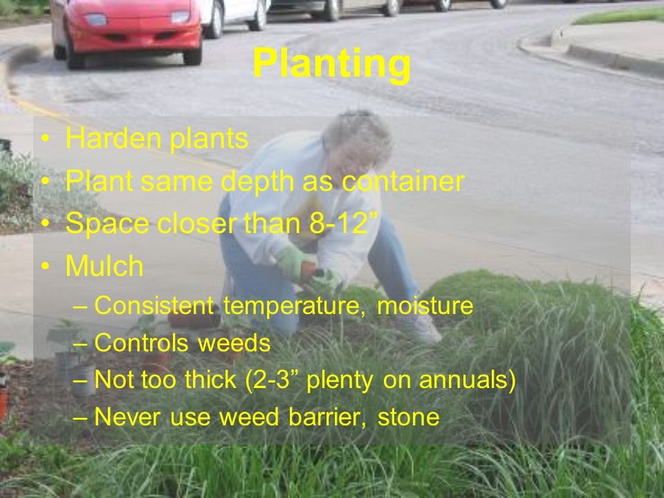 Planting Harden plants Plant same depth as container