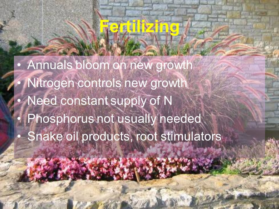 Fertilizing Annuals bloom on new growth Nitrogen controls new growth