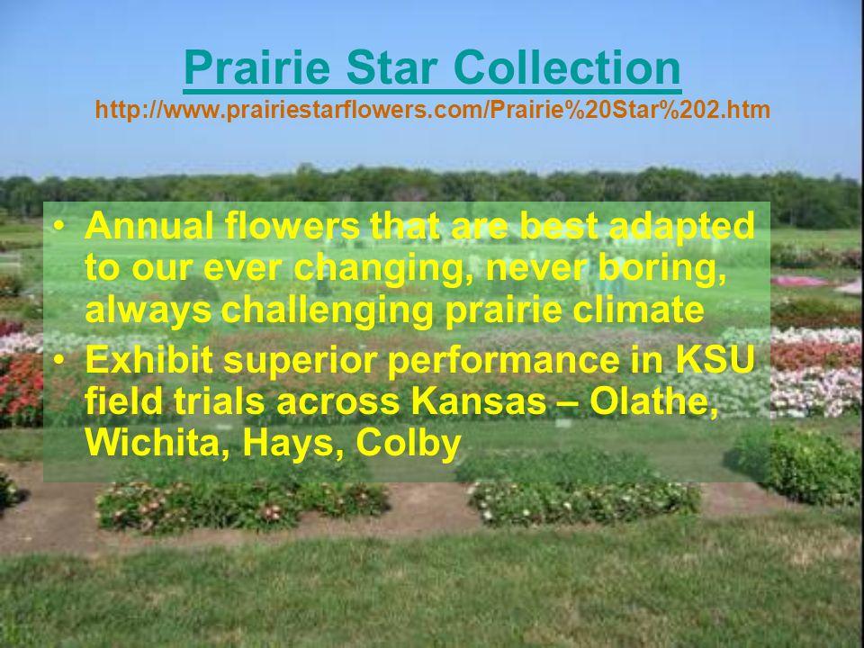 Prairie Star Collection http://www. prairiestarflowers