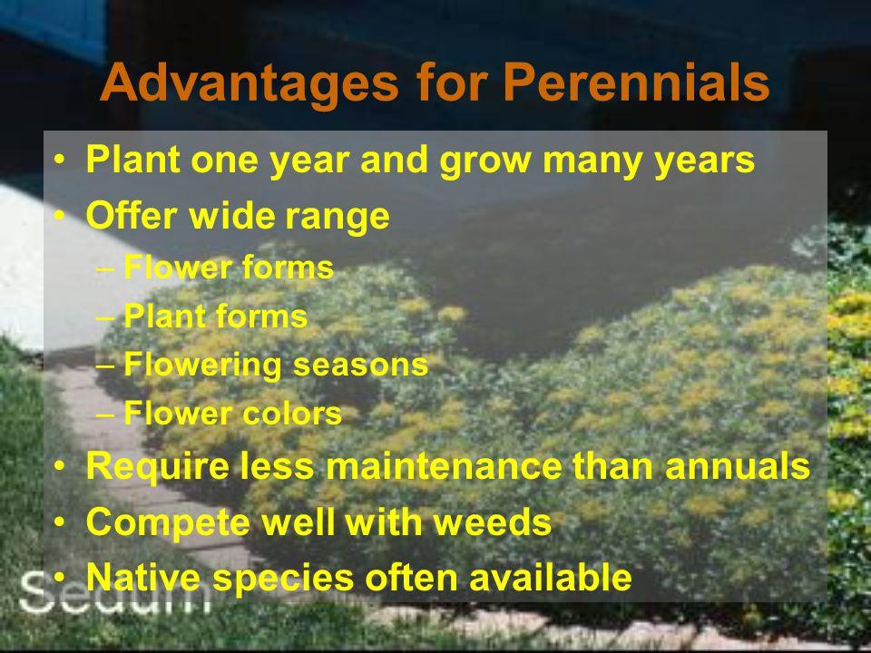 Advantages for Perennials