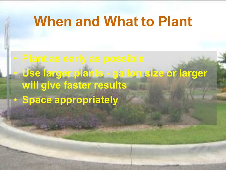 When and What to Plant Plant as early as possible