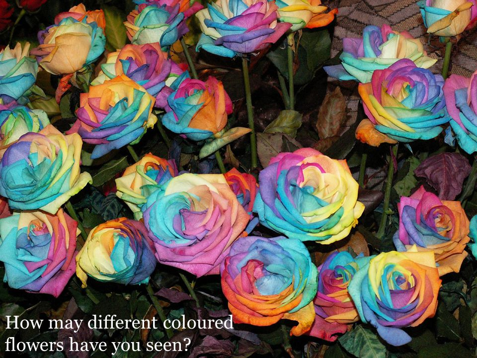 How may different coloured flowers have you seen