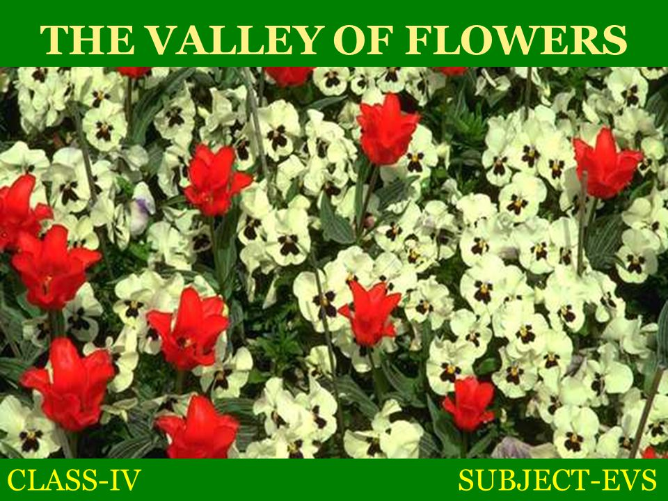 THE VALLEY OF FLOWERS CLASS-IV SUBJECT-EVS