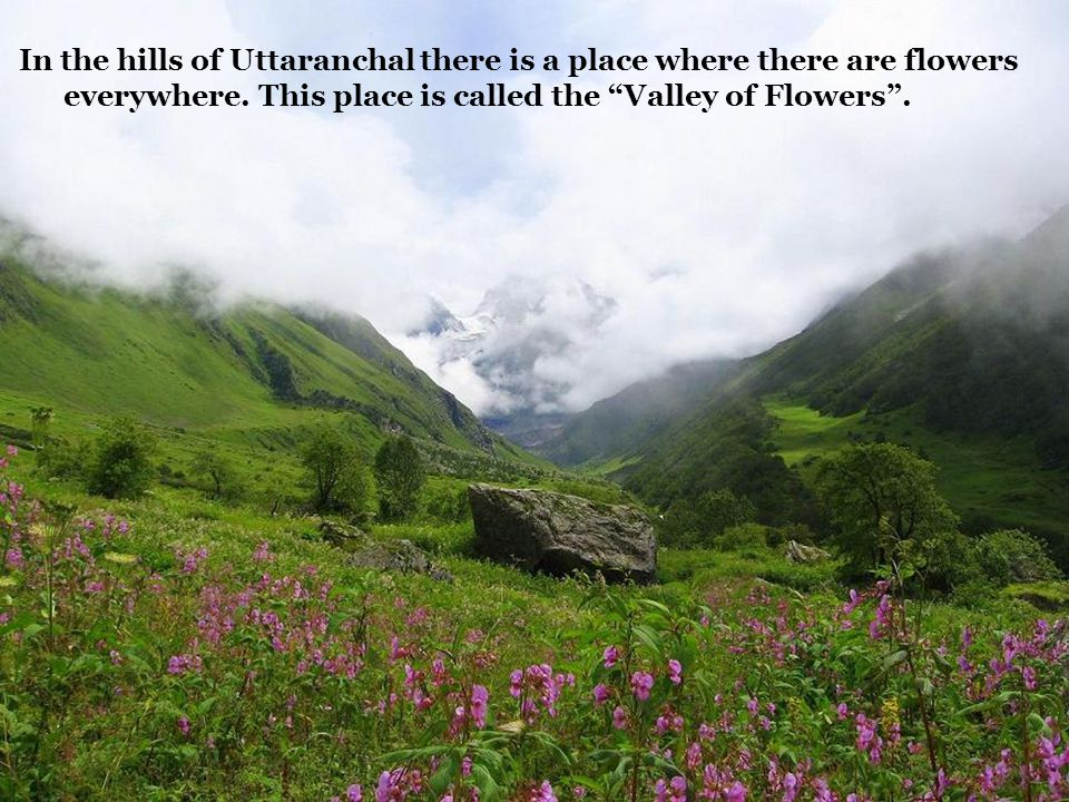 In the hills of Uttaranchal there is a place where there are flowers everywhere.