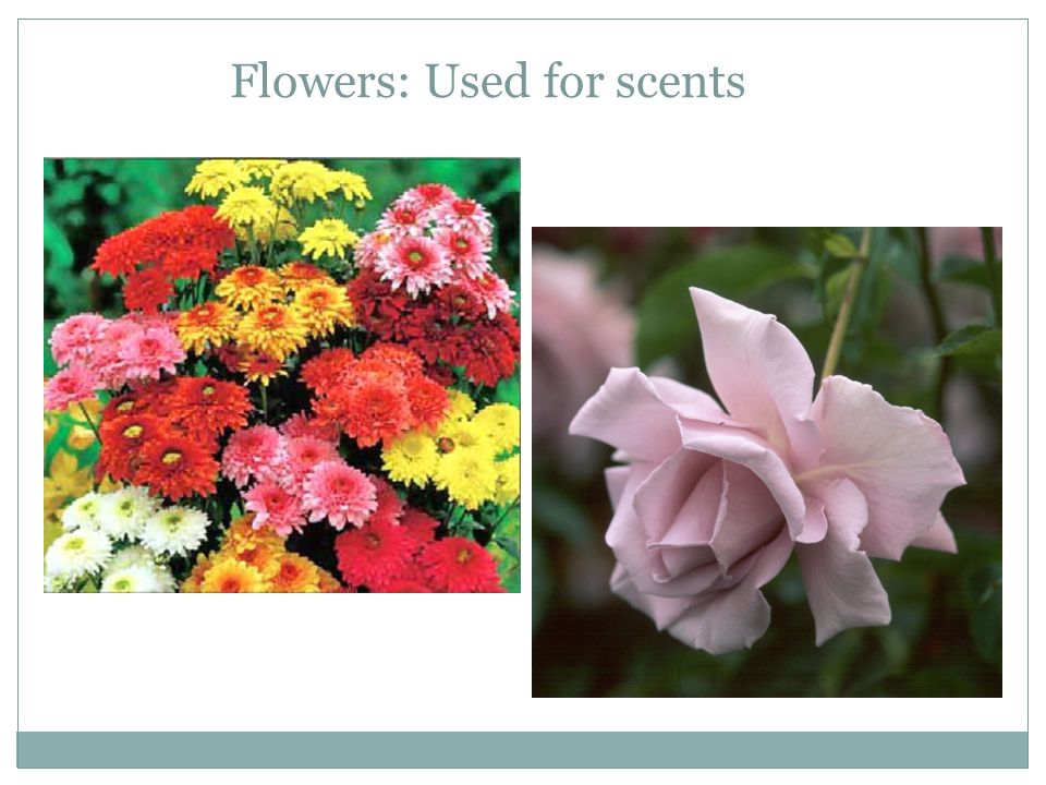 Flowers: Used for scents