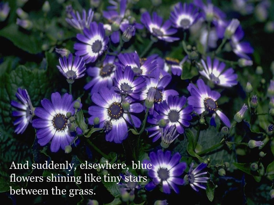 And suddenly, elsewhere, blue flowers shining like tiny stars between the grass.