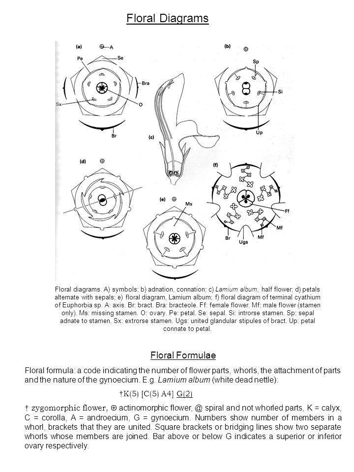 Floral Diagrams Floral Formulae
