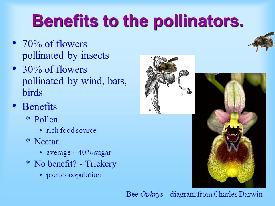 Benefits to the pollinators.