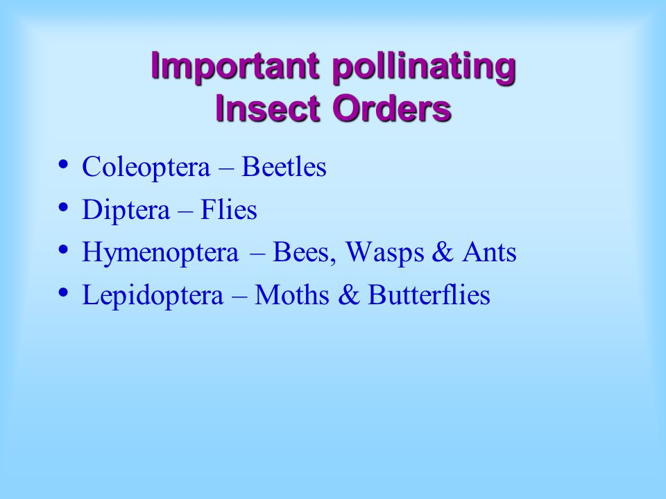 Important pollinating Insect Orders