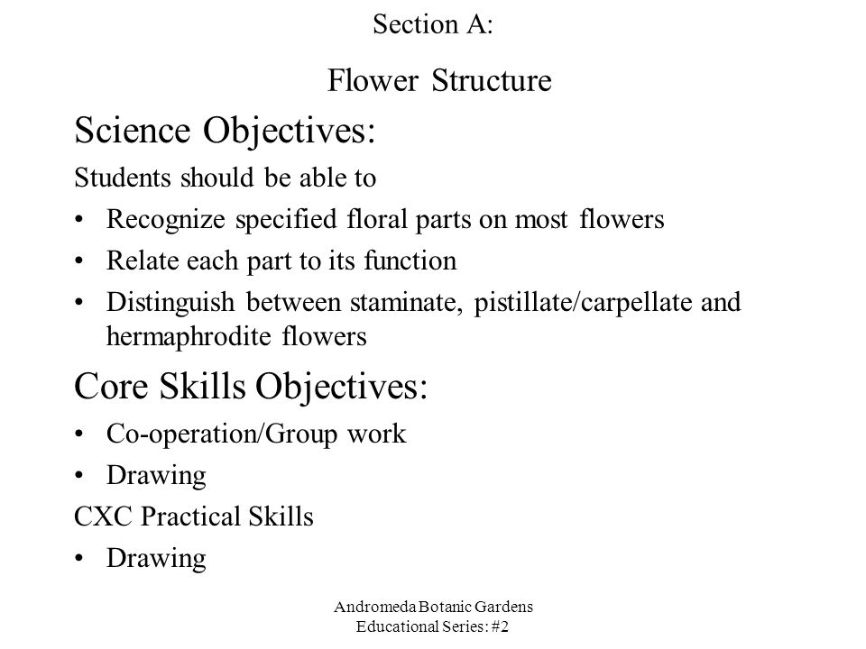 Section A: Flower Structure