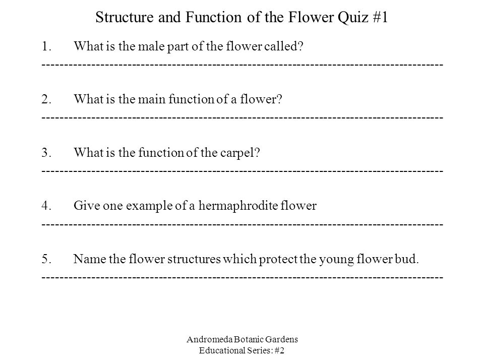 Structure and Function of the Flower Quiz #1