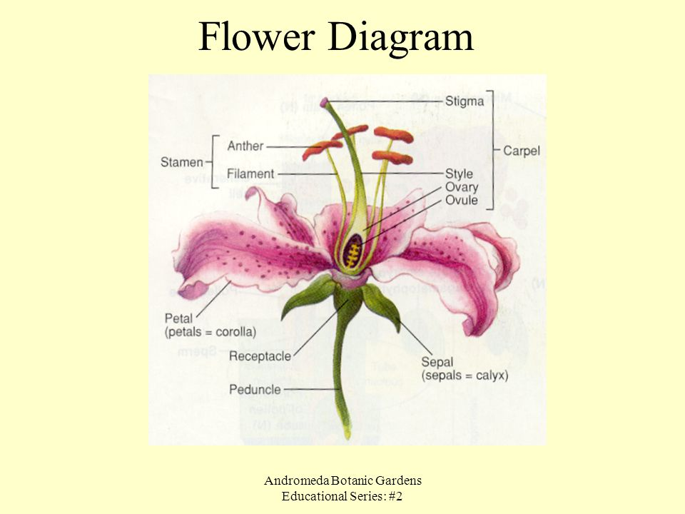 Andromeda Botanic Gardens Educational Series: #2
