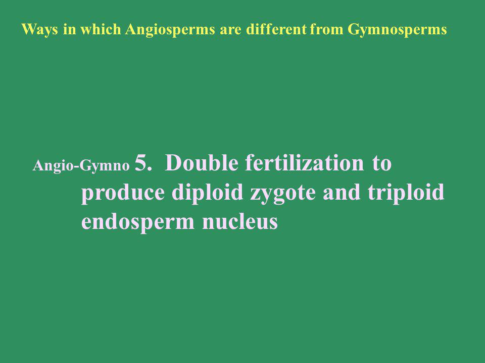 Ways in which Angiosperms are different from Gymnosperms
