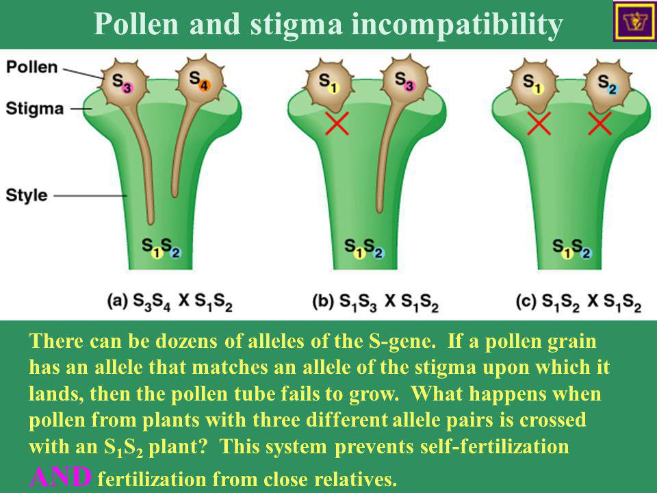 Pollen and stigma incompatibility