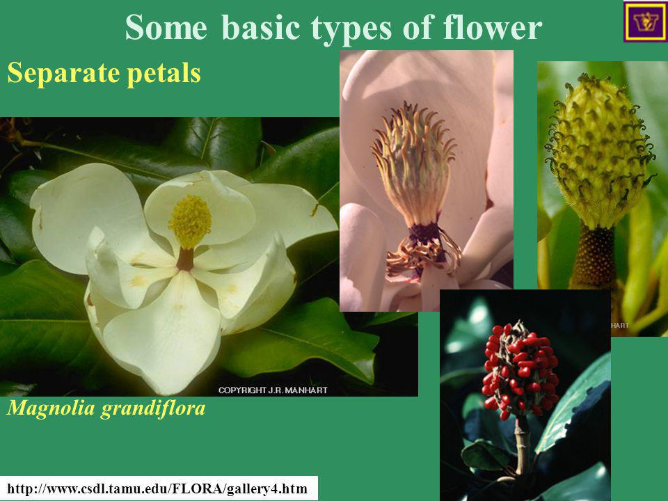 Some basic types of flower