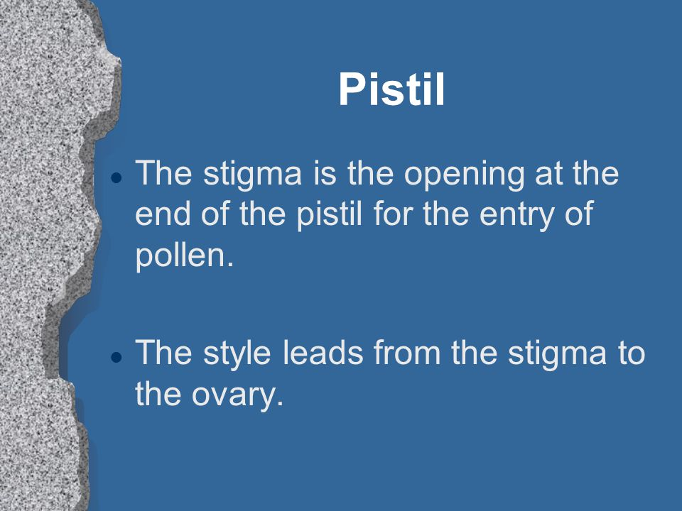 Pistil The stigma is the opening at the end of the pistil for the entry of pollen.